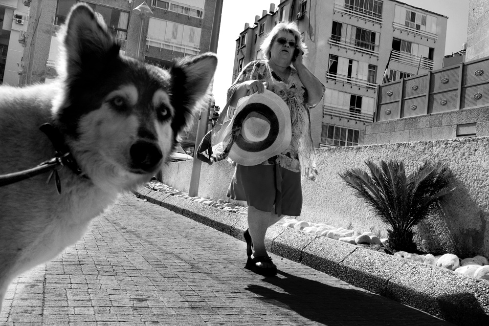 dogs_005.jpg