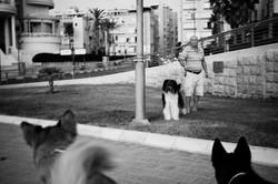dogs_017.jpg