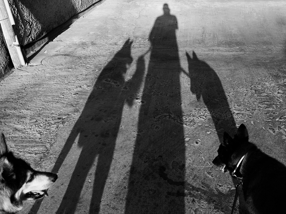 dogs_001.jpg