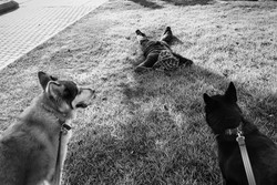 dogs_021.jpg
