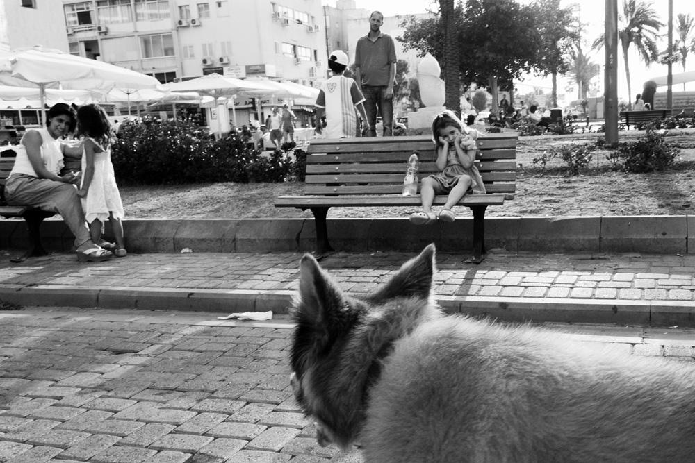 dogs_010.jpg
