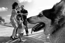 dogs_003.jpg