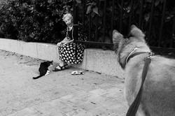 dogs_011.jpg