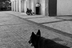 dogs_009.jpg