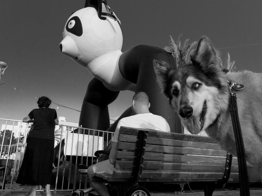 dogs_006.jpg