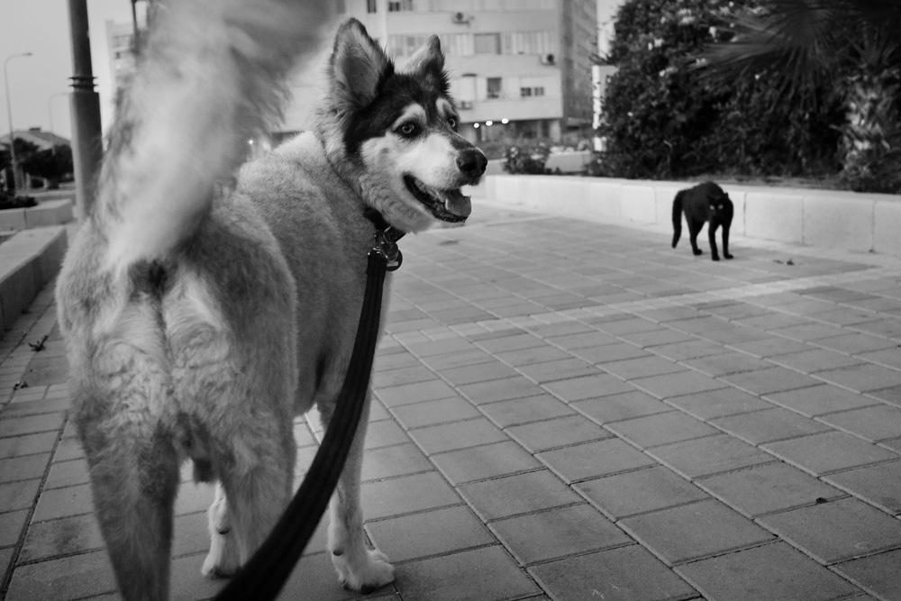 dogs_022.jpg