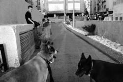 dogs_020.jpg