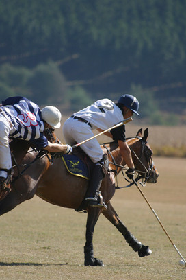 Polo Spurwing Pictures 016.jpg