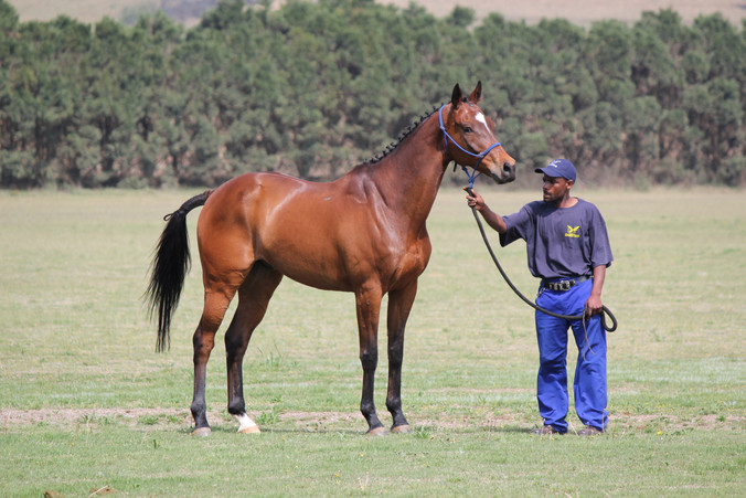 Spurwing Horse Trials 2013 Ings 041.jpg
