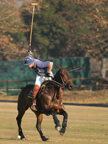 Polo Spurwing Pictures 007.jpg