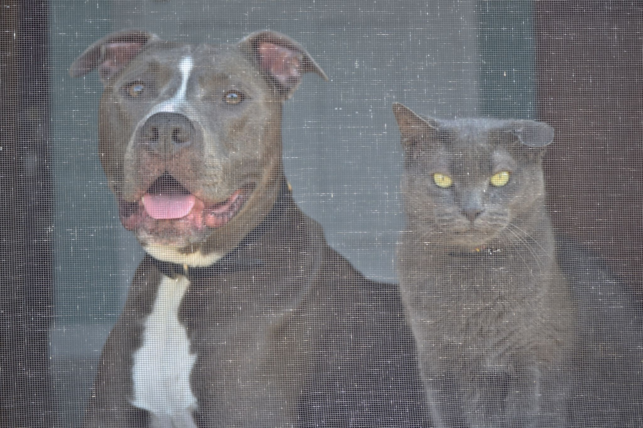 Max & Tyson