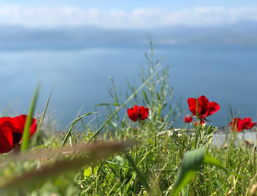 Lente rondom het meer van Galilea