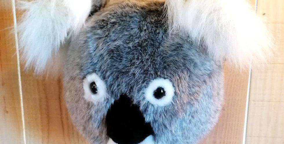 Koala Noah