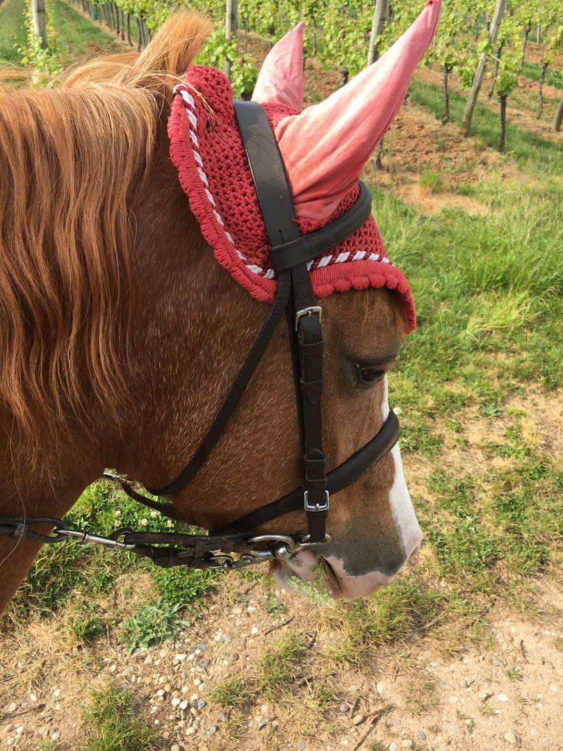 Generation-cheval_randonnee_equestre2.jpg