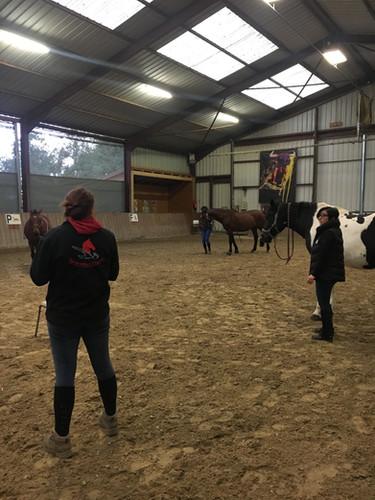 Generation-cheval_massage3.JPG