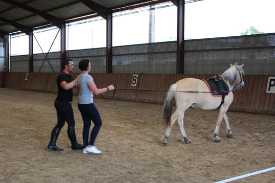Generation-cheval_ethologie3.JPG