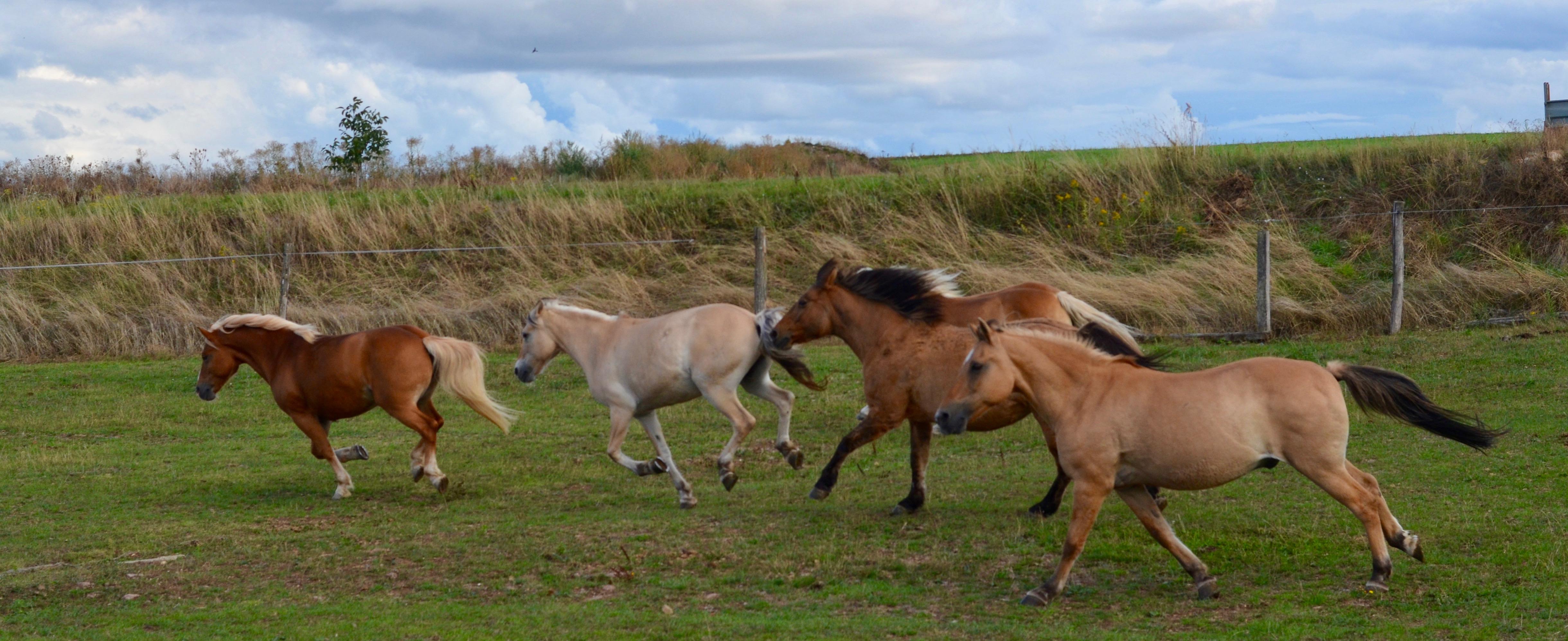 Generation-cheval_prairie1