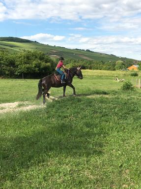 Generation-cheval_cross1.JPG