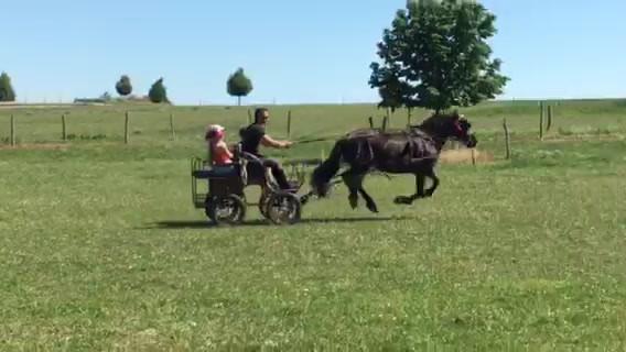 Generation-cheval_Attelage prairie.MOV