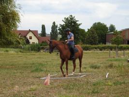 Generation-cheval_trec1.JPG