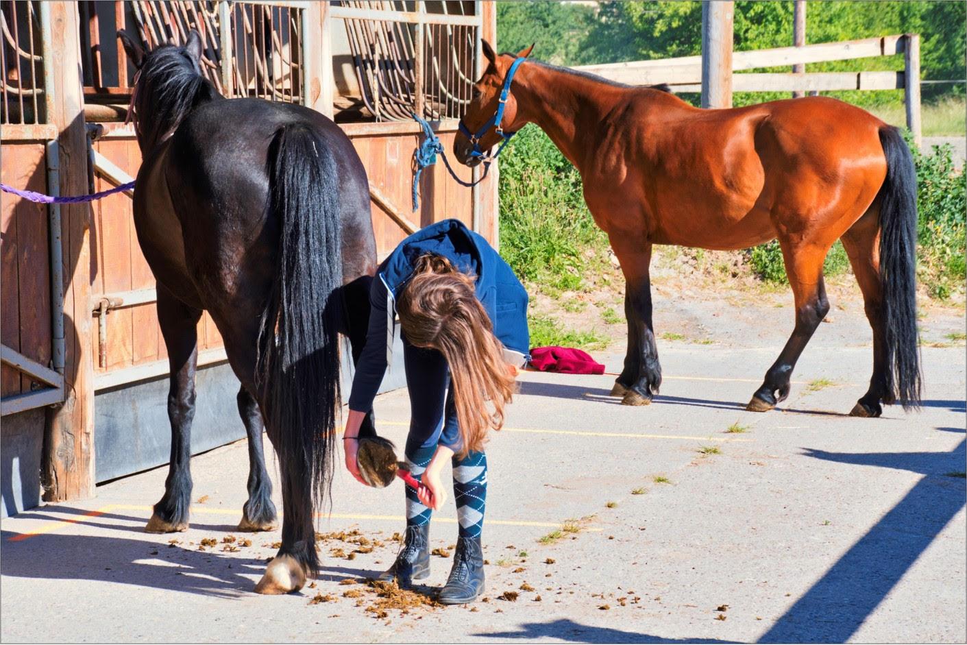 Generation-cheval_51