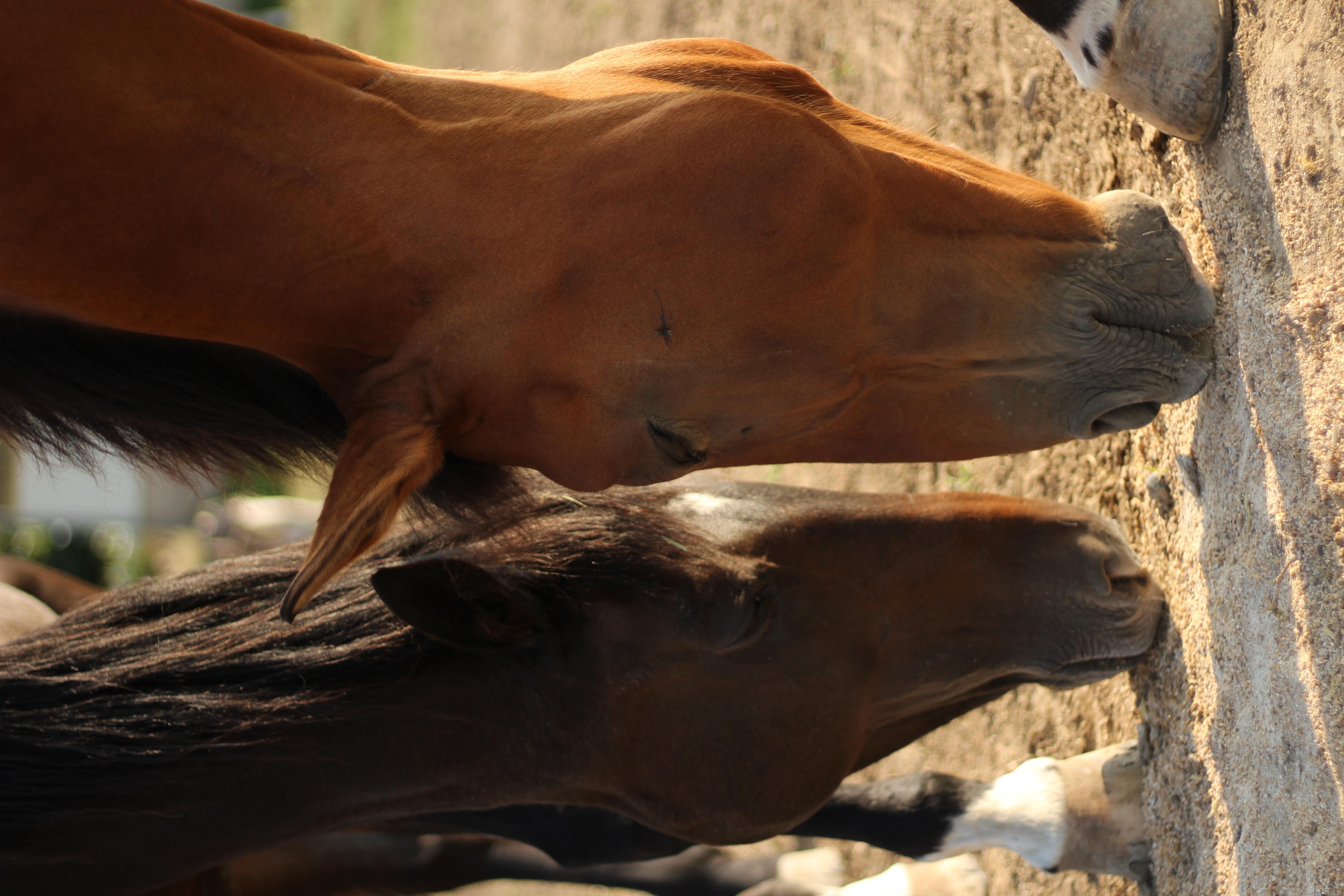 Generation-cheval_IMG_8971