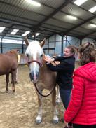 Generation-cheval_massage1.jpg