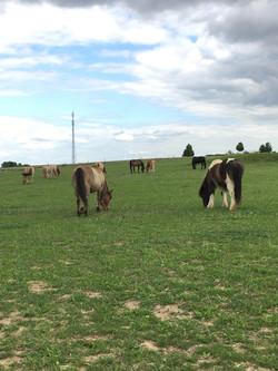 Generation-cheval_poney
