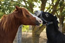 Generation-cheval_IMG_8889