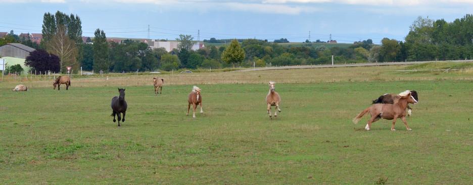 Generation-cheval_prairie1.jpg