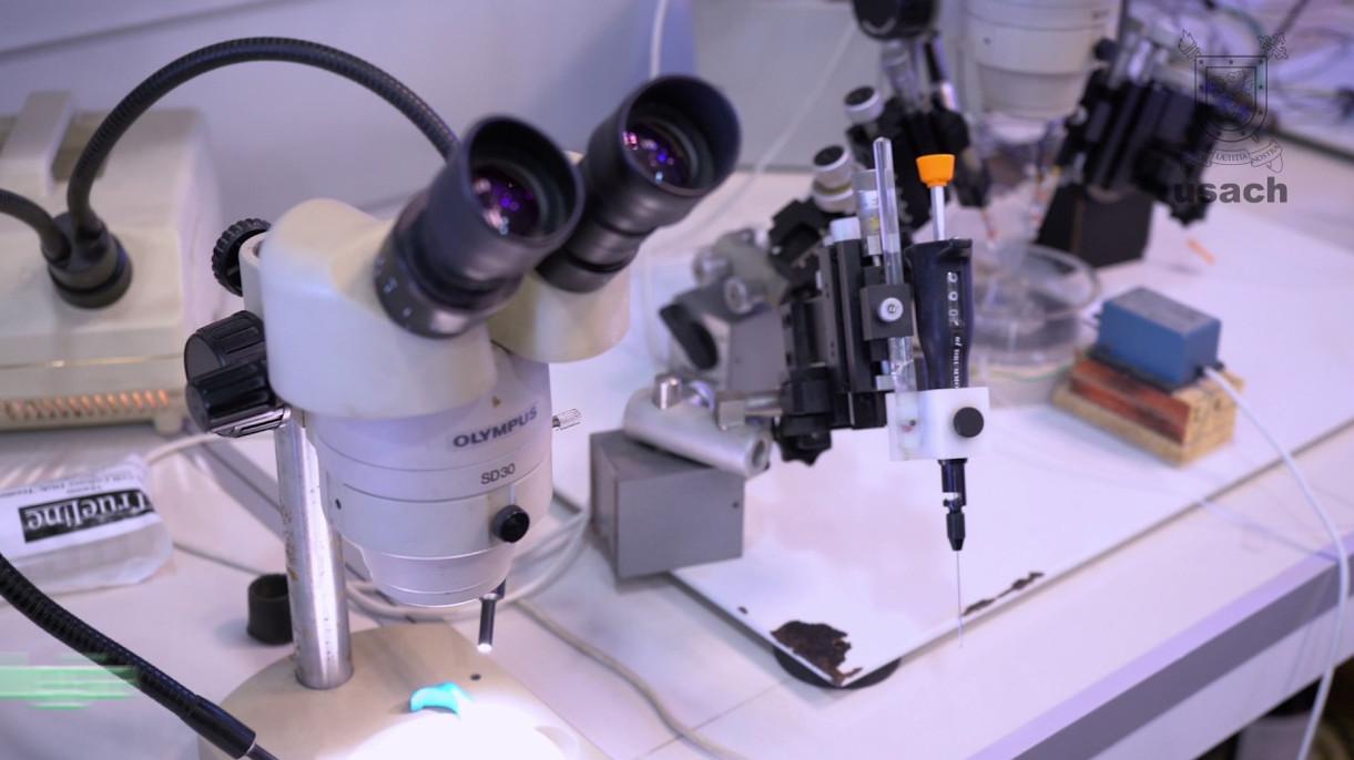 XXXV Congreso Nacional de estudiantes de Bioquímica y carreras afines