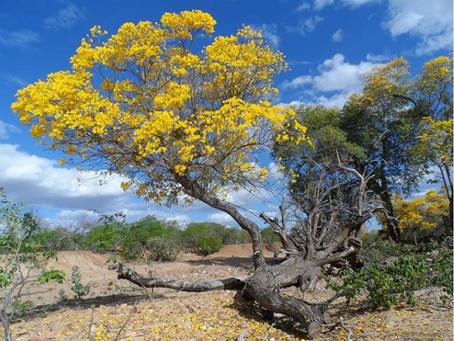 Entrevista: Saúde Integral das Populações do Campo, da Floresta e das Águas