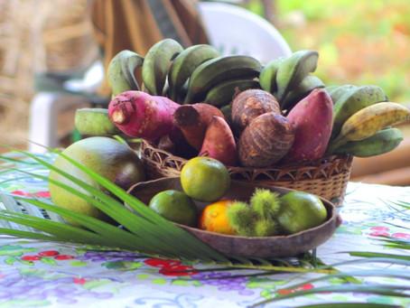 Agroecologia e solidariedade entre comunidades tradicionais no combate à COVID-19