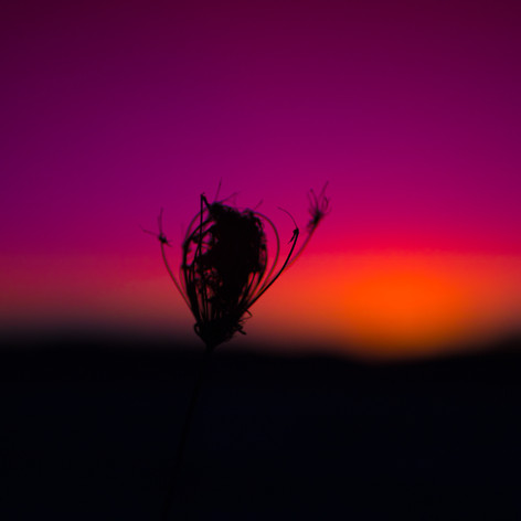 Sunsetting Flower