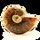 Thumbnail: Ammonite