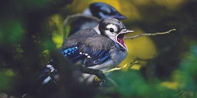 Bird3_EB.jpg