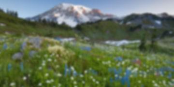 class-greengo-nature-landscape.jpg