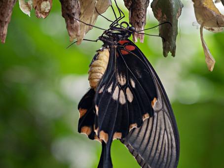 Si la crisis te pilla en plena transformación o te obliga a ella, recuerda que la oruga debe morir.