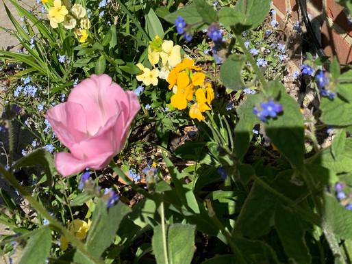 Blooming blessings