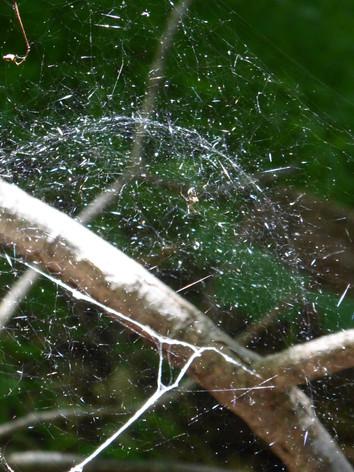 Web Dome