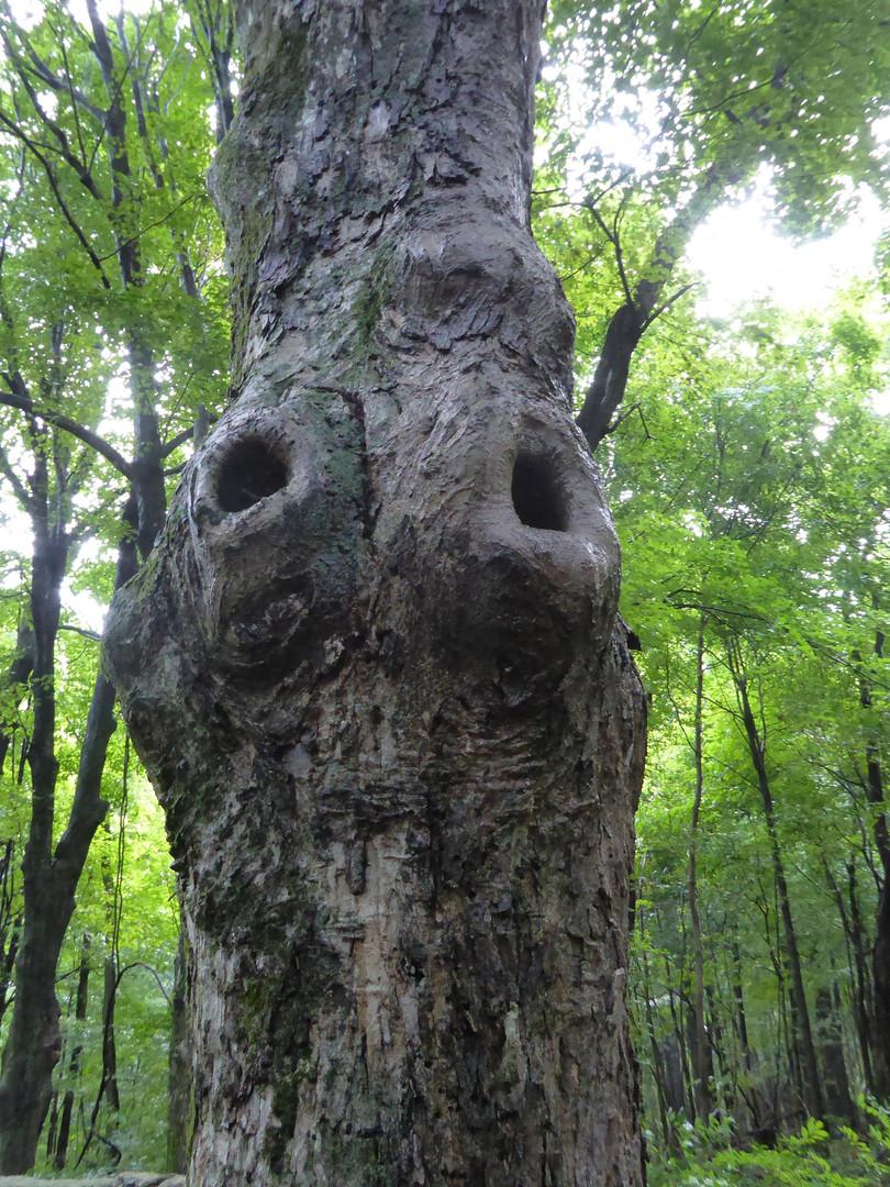 Hole In Tree