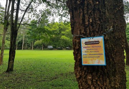 big tree preservation project