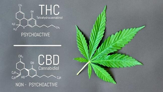 CBD-vs-THC.jpg