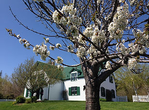 Green Gables with cherry
