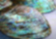 00860_bL.jpg