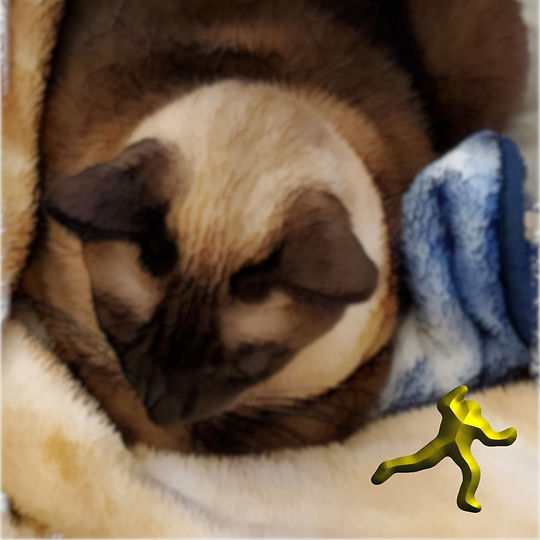 Interjection by a Siamese Cat