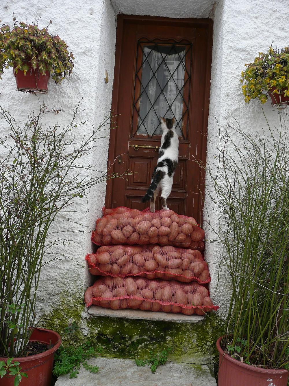חתול מציץ בדלת