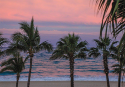 Palm trees in predawn sky