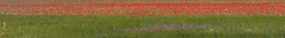 I colori dei fiori sulla piana di Castelluccio di Norcia, come le risorse che sbocciano in noi