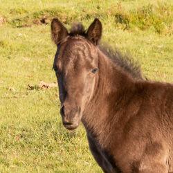 Foal-1.jpg